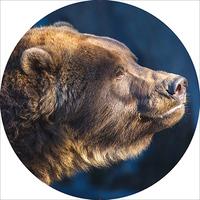 Чехол запасного колеса Медведь R16, 17 диаметр 77см SKYWAY экокожа (полиэстер)